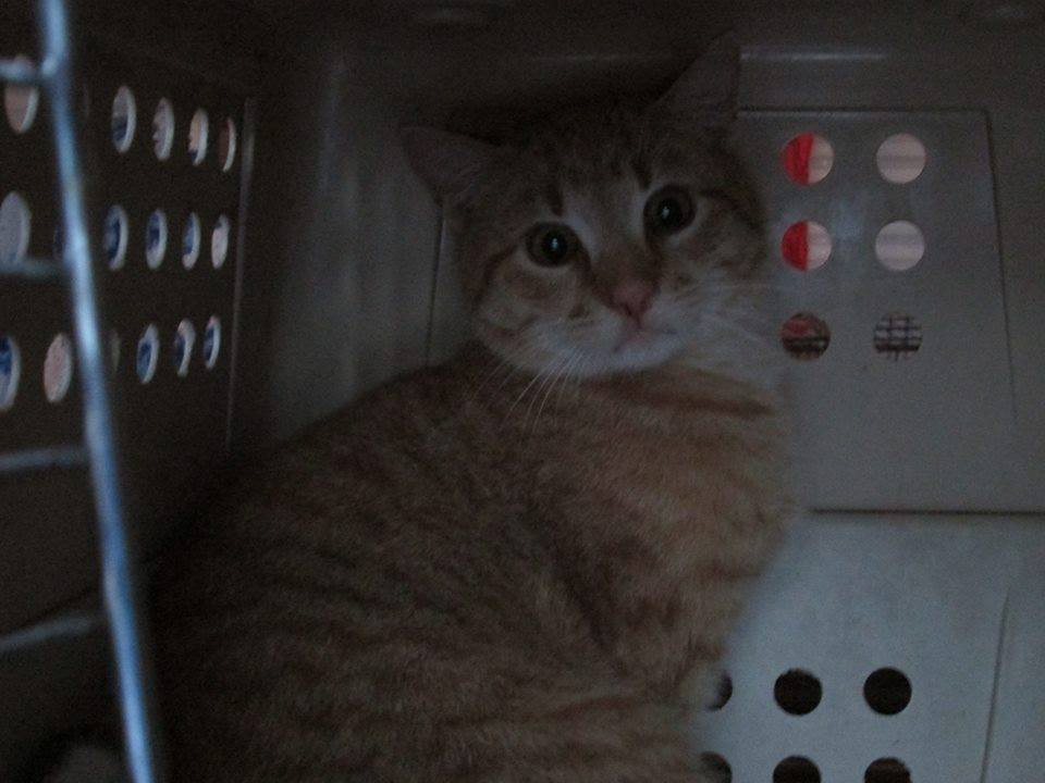 FF-009 Feral cat