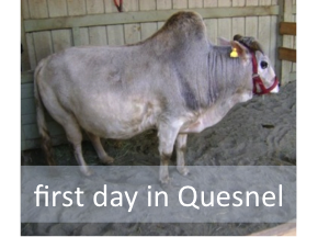 First day in Quesnel