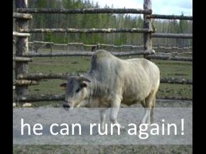 He can run again